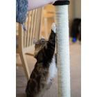 Feliway Classic Plug In Diffuser + Refill Pack Calm Cat Stress Relief Pheromones