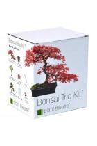 Bonsai Trio Kit - 3 Distinctive Bonsai Trees to Grow Valentines Gift