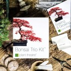 Bonsai Trio Kit - 3 Distinctive Bonsai Trees to Grow Valentines Gift