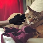2-in-1 Pet Glove: Grooming Tool + Furniture Pet Hair Remover Mitt - For Cat & Dog - Long & Short Fur
